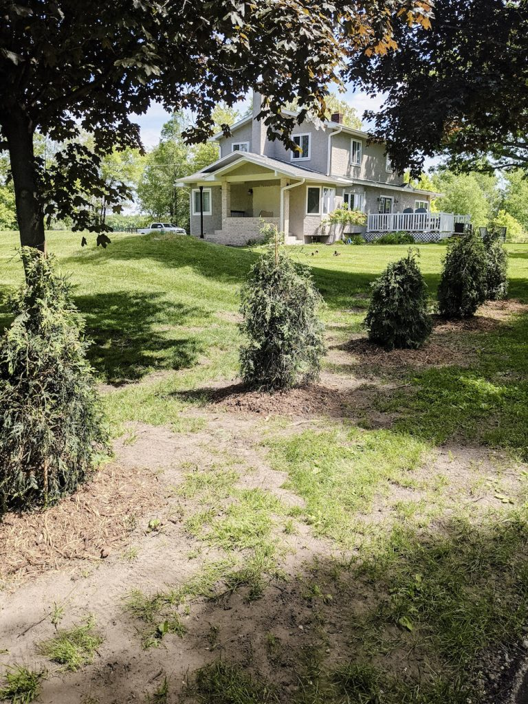 Planting trees for privacy and noise reduction can also look beautiful and contribute to the curb appeal of your home.
